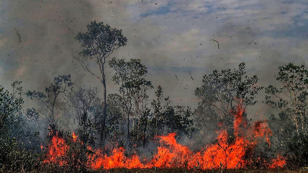 Amazonský prales potřebuje na svou obnovu 100 let
