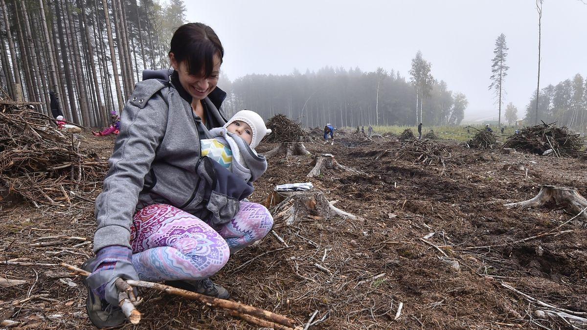 Den za obnovu lesa přilákal po celé ČR 31 000 dobrovolníků