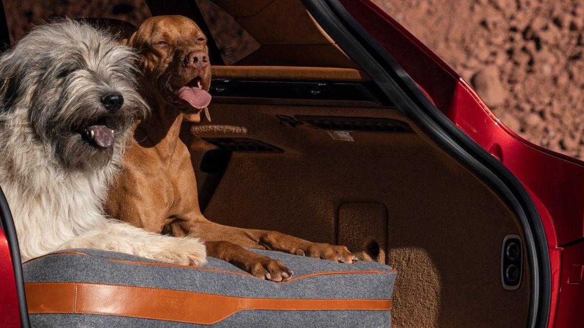 Aston Martin DBX může být přizpůsoben pro psy i pušky