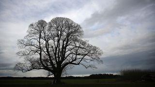 ŽIVĚ: Počasí bude divoké, apríl by se nemusel stydět