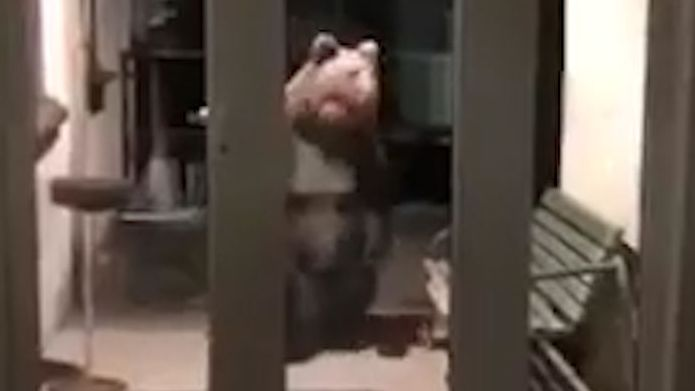 Medvědi se v Tatrách přemnožili, tak vážné to ještě nebylo, varuje radnice