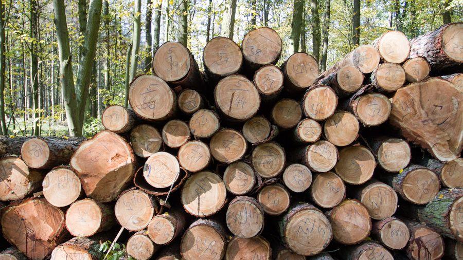Při kácení stromů v Orlických horách zemřel mladý muž