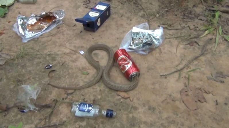Kobra uvízla v plechovce od piva