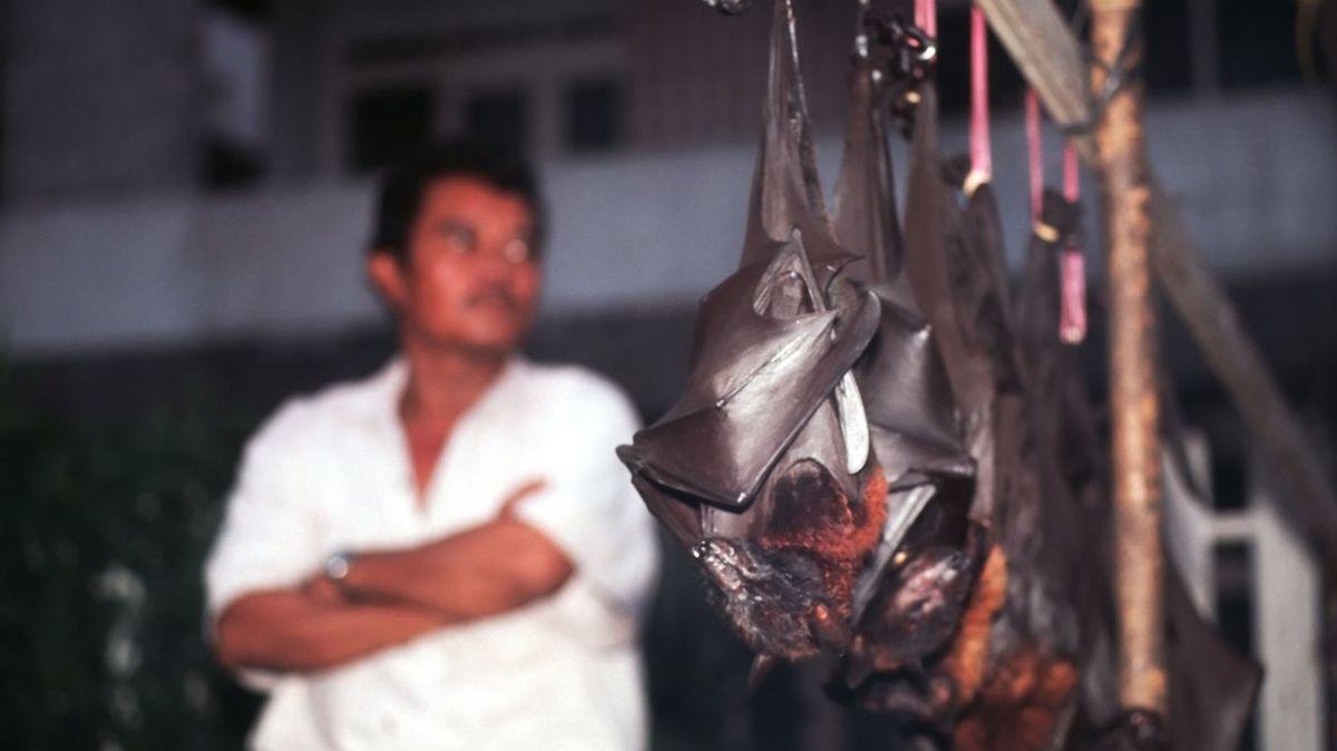 Paniki se nebojíme, mají jasno Indonésané. Dál jedí jídlo z netopýrů