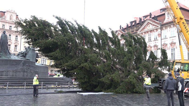 Z vánočního stromu v Praze budou charitativní stoly i potrava pro zvířata