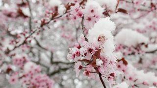 Česko na apríla zasáhl mimořádný mráz, teploty padaly až na minus 20 stupňů