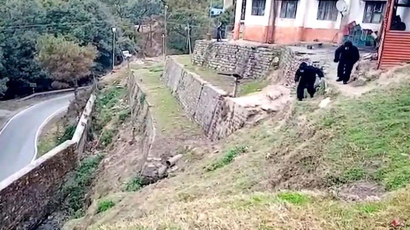 Policisté se převlékli za medvědy, aby odradili drzé opice