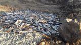 Ministerstvo nabídlo pomoc rybářům na otrávené Bečvě