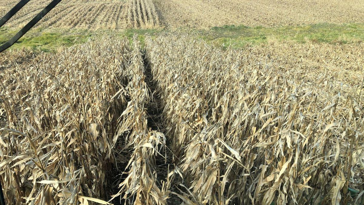 Oteplení planety v Česku: Je největší sucho za posledních 2100 let