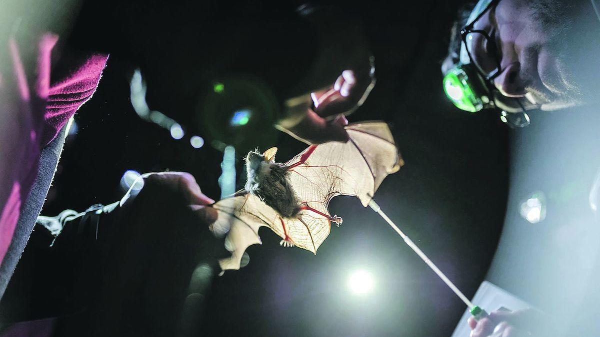 Po zákazu DDT kolonie netopýrů sílí