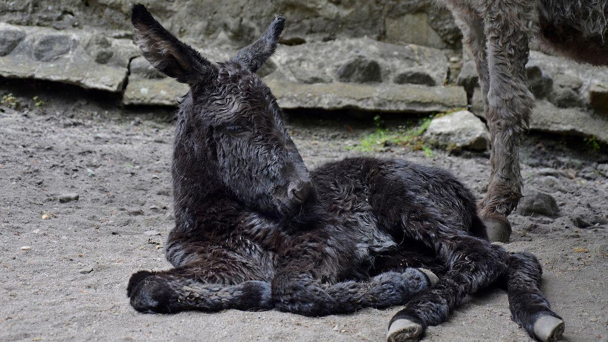 Huňatá hromádka roztomilosti láká do děčínské zoo