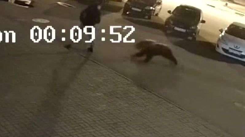 Medvěd na parkovišti napadl muže, útok zachytila kamera