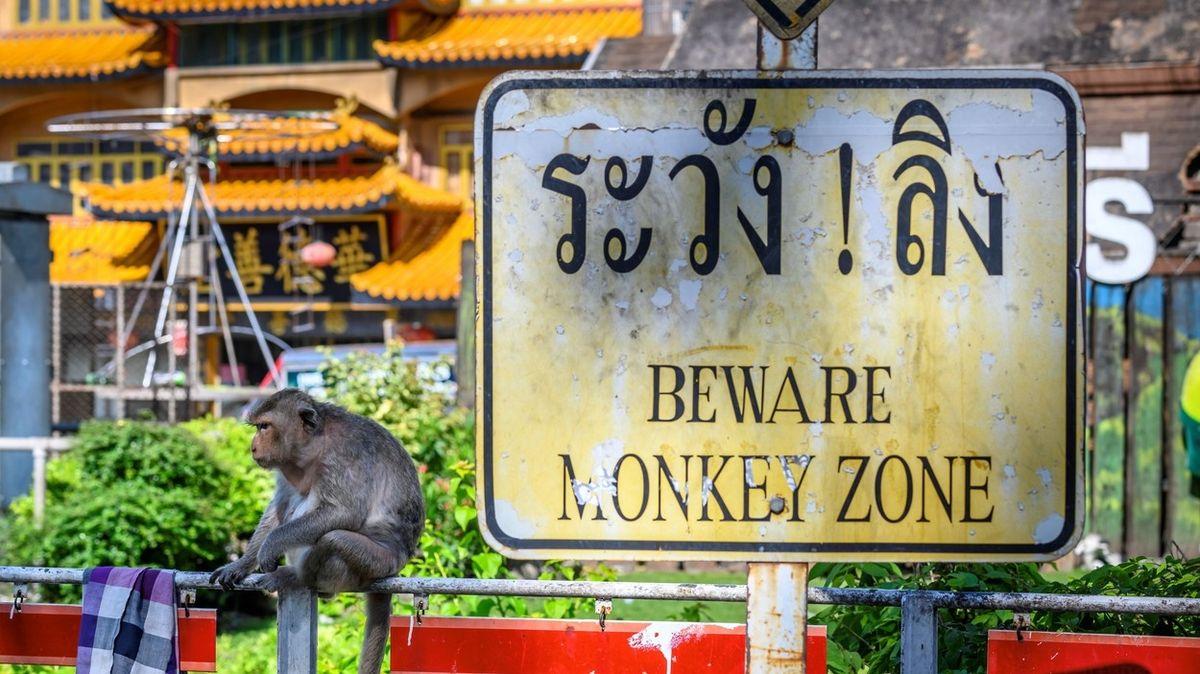 O město opic bojují dva druhy primátů. A lidé prohrávají