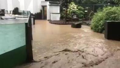 Víkendové deště spláchly i část pražské zoo, zatopeny byly bazény lachtanů i tučňáků