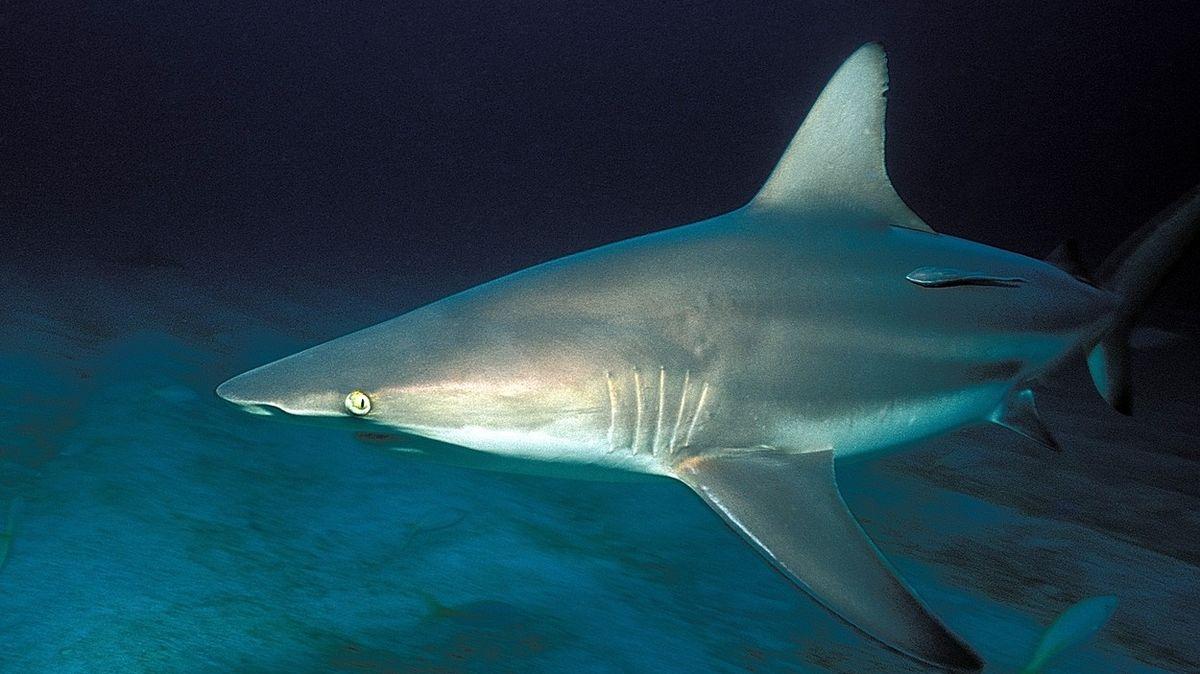 Ženu pokousal žralok v den, kdy si vzala volno z natáčení filmu o žralocích