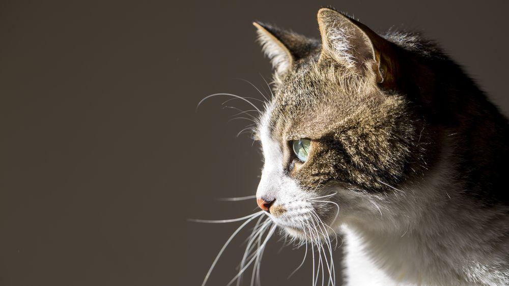 Kočka uvězněná v přepravním kontejneru přežívala dva měsíce na pavoucích