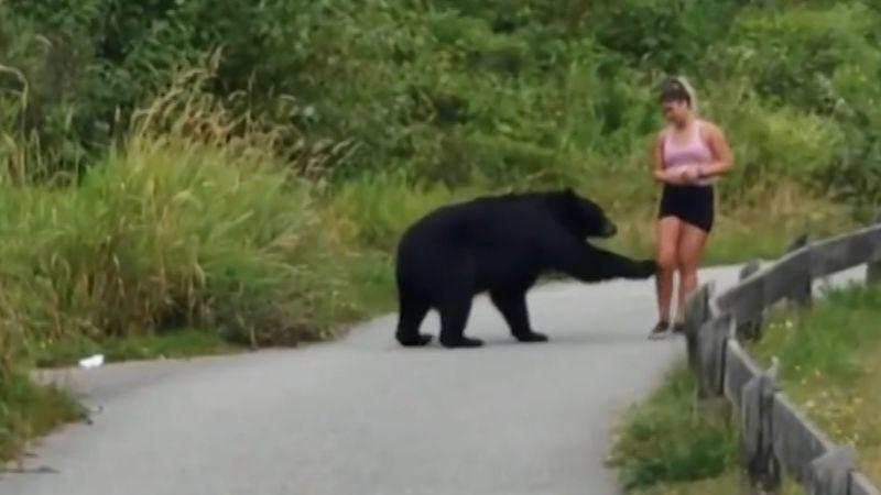 Zvědavý medvěd šťouchnul do běžkyně