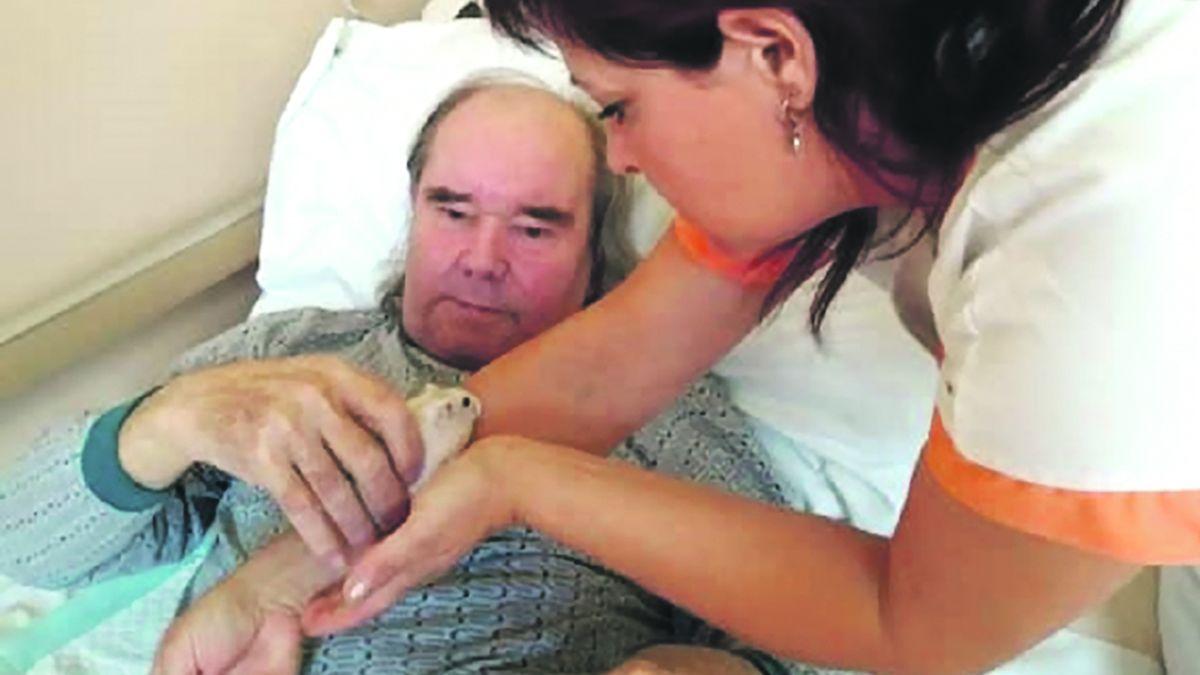 V lounské nemocnici dělají společnost křečci