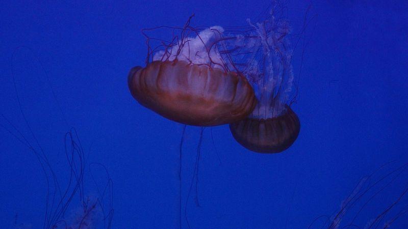 VÝLETY Z KARANTÉNY: Prohlédněte si největší medúzárium v Evropě