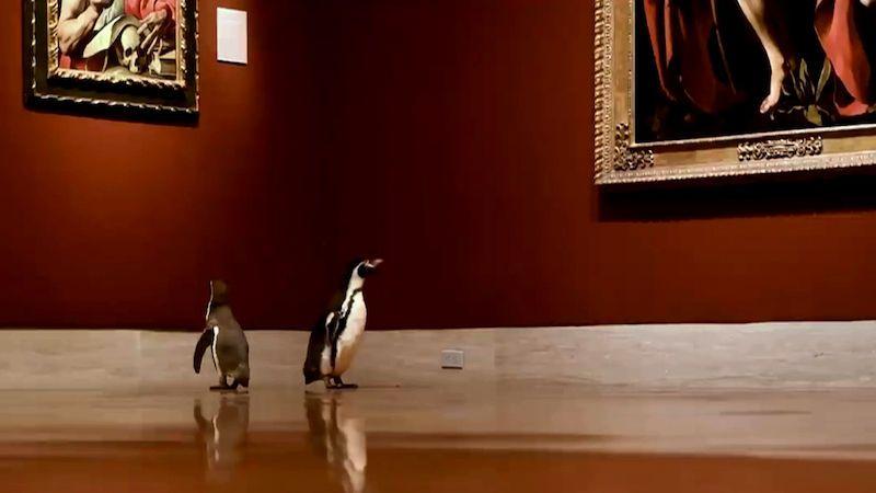 Tři tučňáci vyrazili na soukromou prohlídku galerie