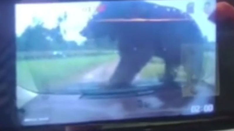 Medvěd v čínském safari vyskočil na auto s rodinou. Nedopadlo to dobře