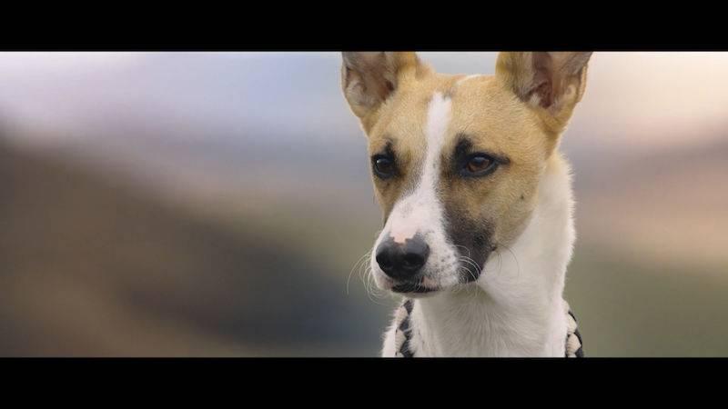 Gump - pes, který naučil lidi žít (2021) HD trailer