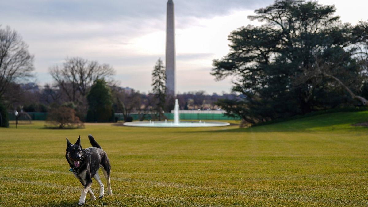 Bidenovi psi jsou po výcviku zpět v Bílém domě