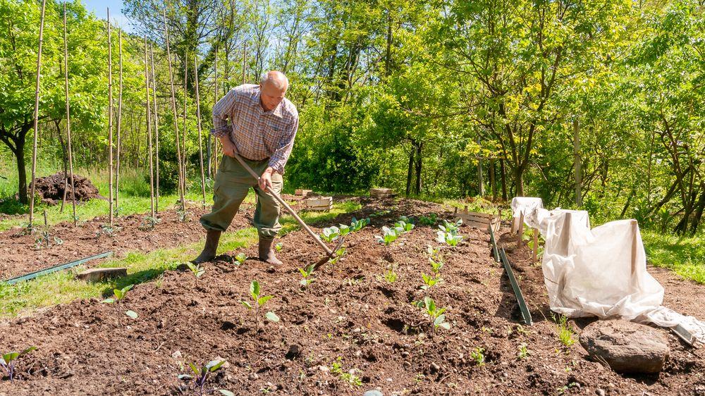 Investice do zahradničení během pandemie rostou