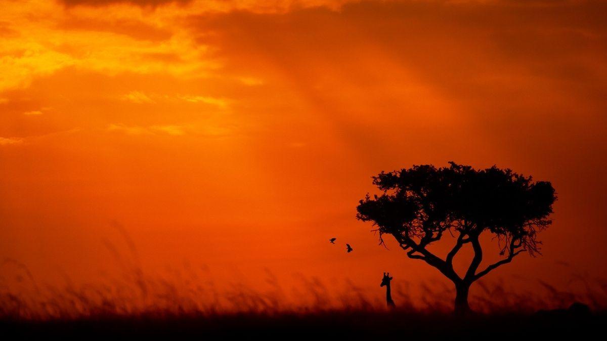 FOTO: Keňské národní parky při západu slunce