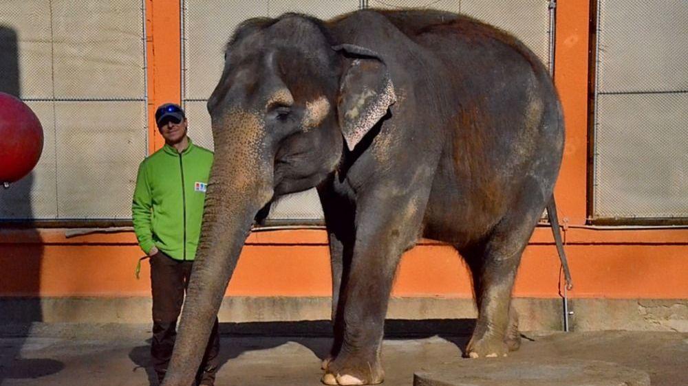 Slonice Rání otevřela všechny typy zámků, vzpomíná ošetřovatel z Liberce