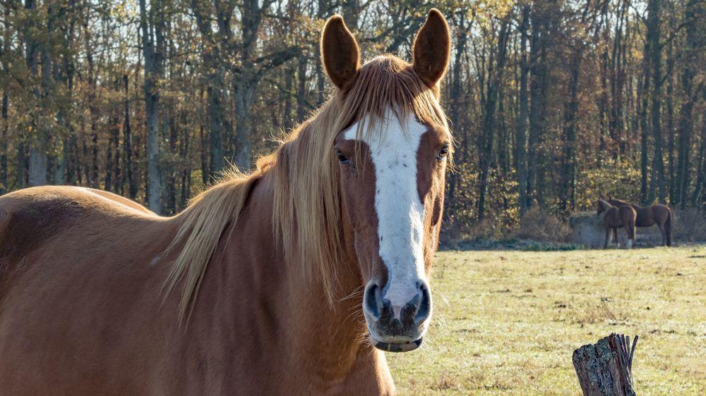 Smutného koně je někdy lepší rovnou utratit