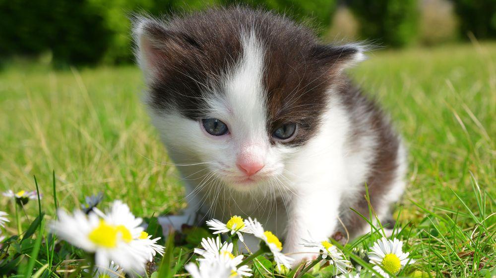 Koťátko z prázdnin je hezkým nápadem, ale víte, do čeho jdete?