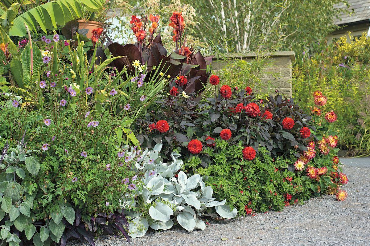 Temnolisté odrůdy soutěží o pozornost s květy a vytvářejí ostré kontrasty s pobledlými sousedy, čímž na záhonu vzniká působivé napětí.