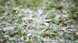 Hrozí přízemní mrazíky, mohou poškodit úrodu