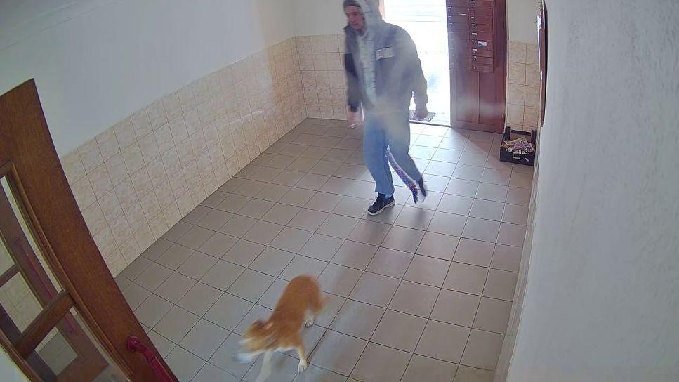 Policie hledá muže a psa, které zachytila bezpečnostní kamera