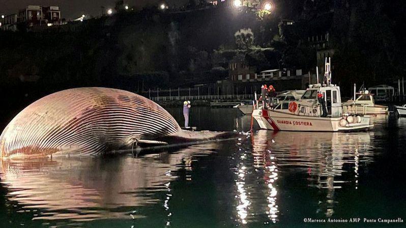 """Do neapolského přístavu přitáhli mrtvolu velryby. Mohly ji zabít """"spalničky"""""""