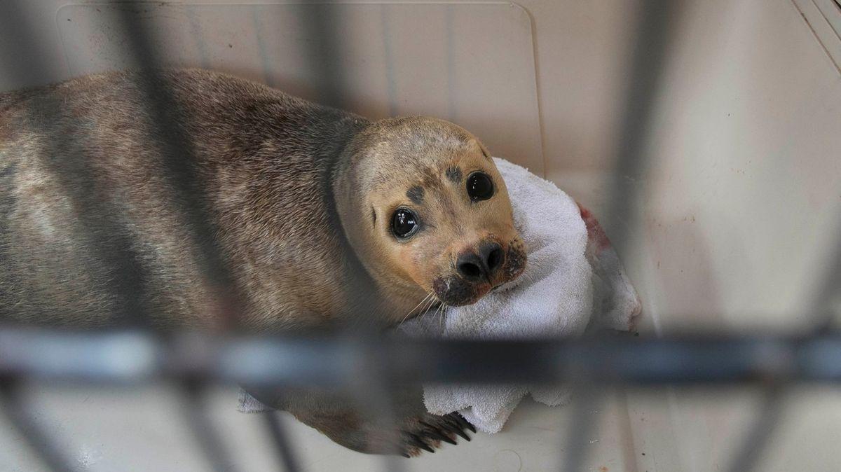 Majitelka psa, který smrtelně zranil tuleně, je špičková advokátka. Trest ji mine
