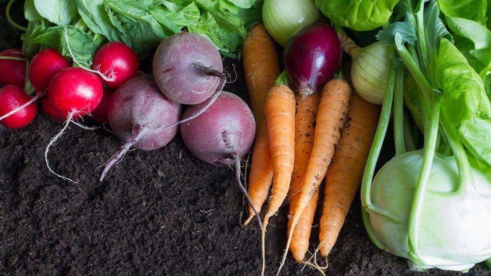 Sezonní potraviny jsou to nejlepší, čím můžete podpořit své zdraví