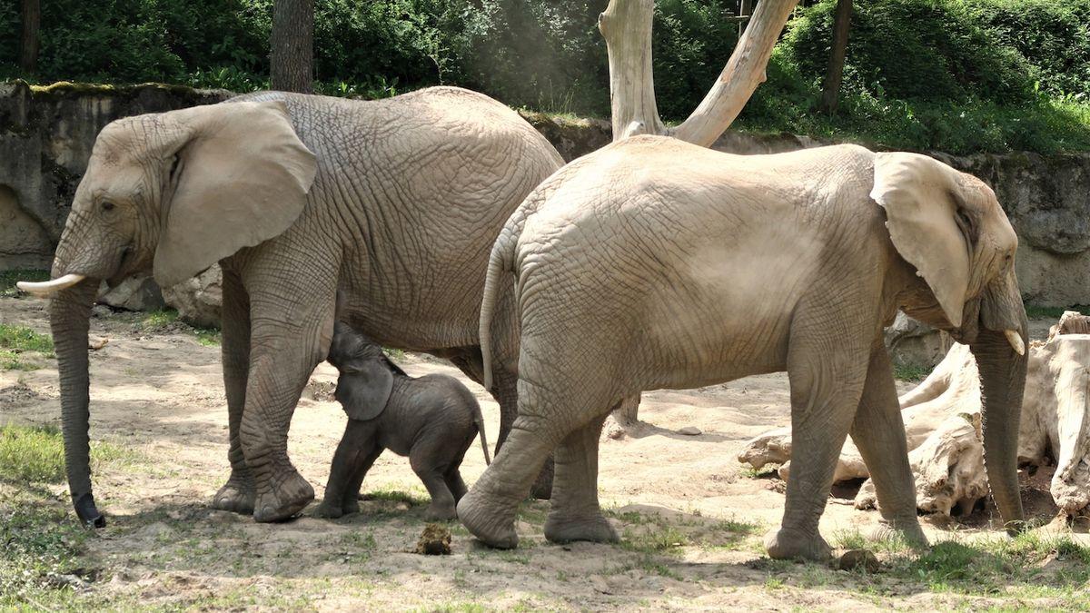 I plošné zavření zoo a botanických zahrad bylo nezákonné