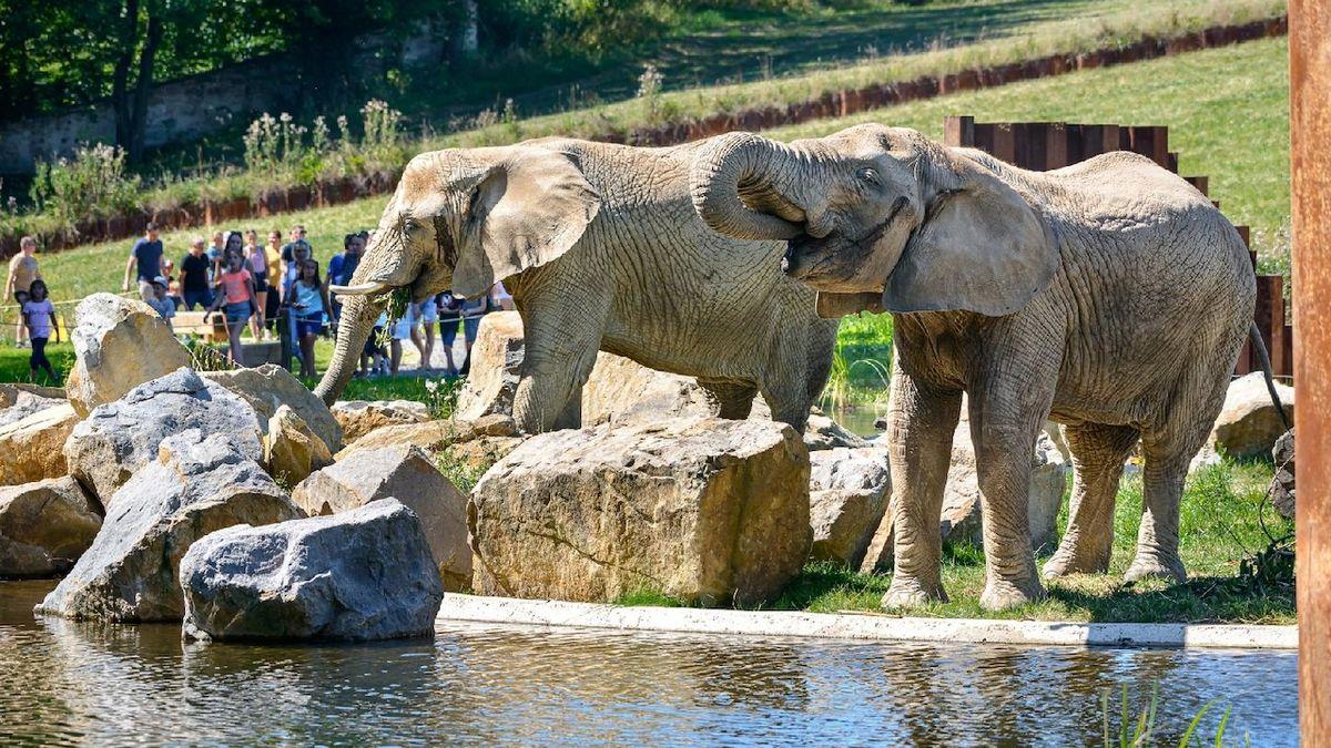 Zlínská zoologická zahrada byla loni pátým turisty nejnavštěvovanějším místem v Česku