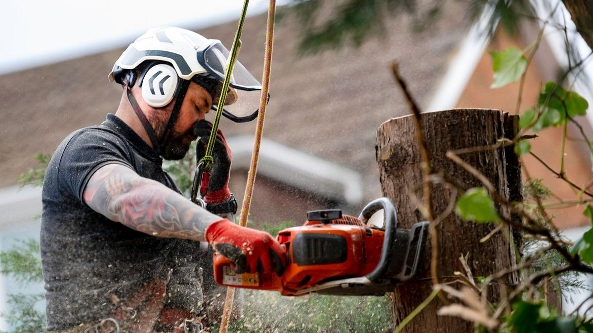 Finanční poradna: I kácení či výsadba stromů na vlastním pozemku se řídí zákonem
