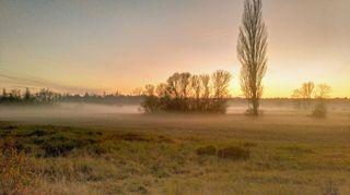 Listopadová šeď bude pokračovat, po víkendu se výrazně ochladí
