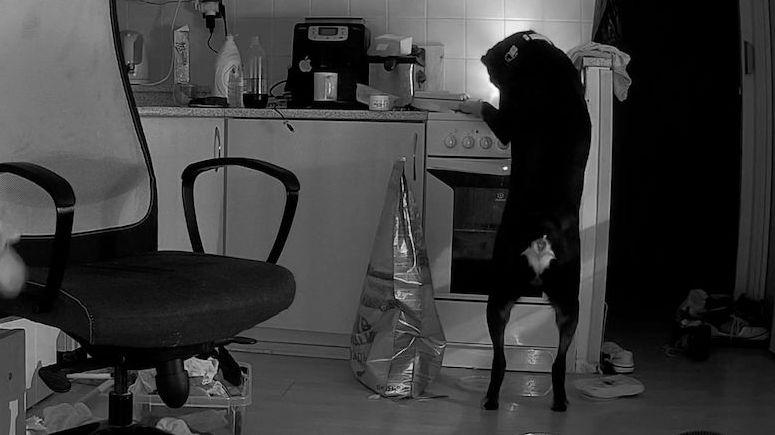 Pes v Sokolově zapálil kuchyň, když hledal jídlo. Natočila ho kamera