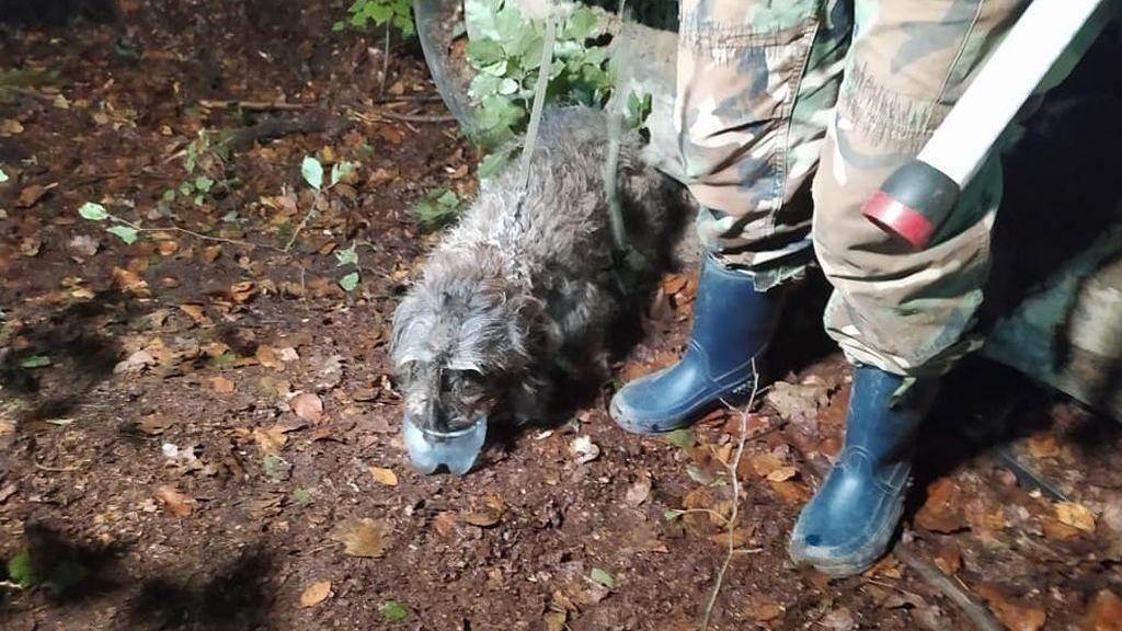 Zachráněný pes v Jizerských horách