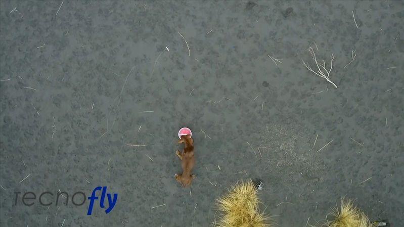 Záchranáře psů na La Palmě nejspíš někdo předběhl, místo zvířat našli lidské stopy