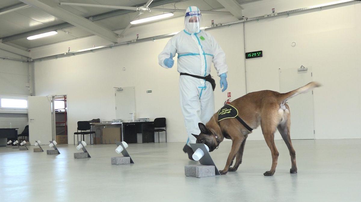 Psi cvičení na covid v Ruzyni nepomáhají, kvůli jihoafrické mutaci je tým v karanténě