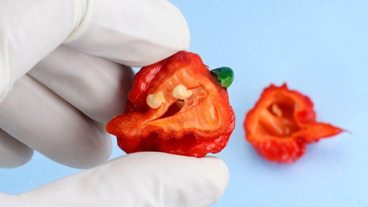 Rekordně plechová pusa. Muž snědl tři nejpálivější chilli papričky za devět sekund