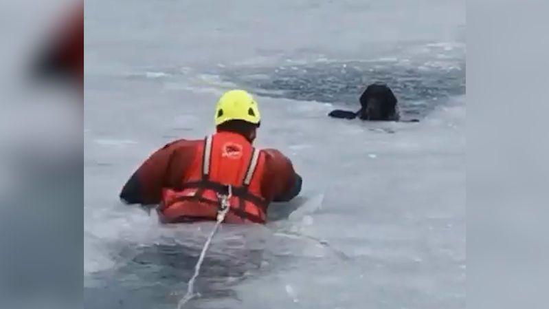Pes proháněl kachny na zamrzlé přehradě v Jablonci, led se ale prolomil