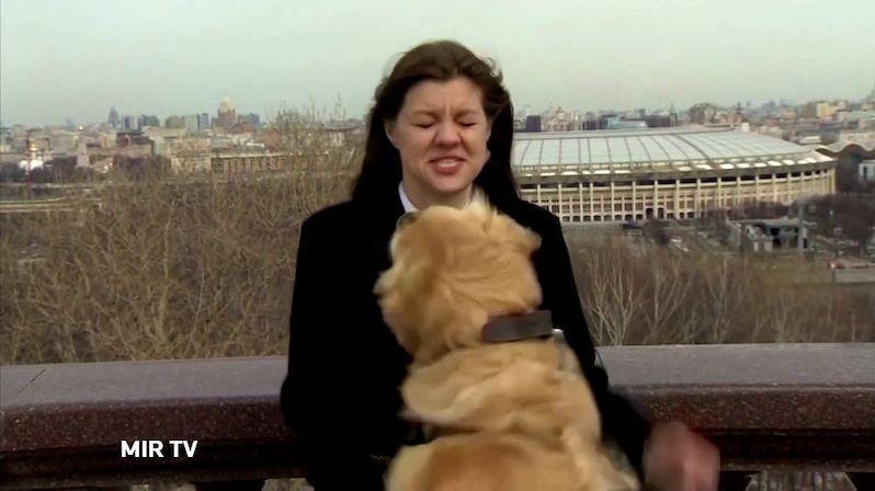 Hravý retrívr okradl reportérku v přímém přenosu, video se stalo senzací