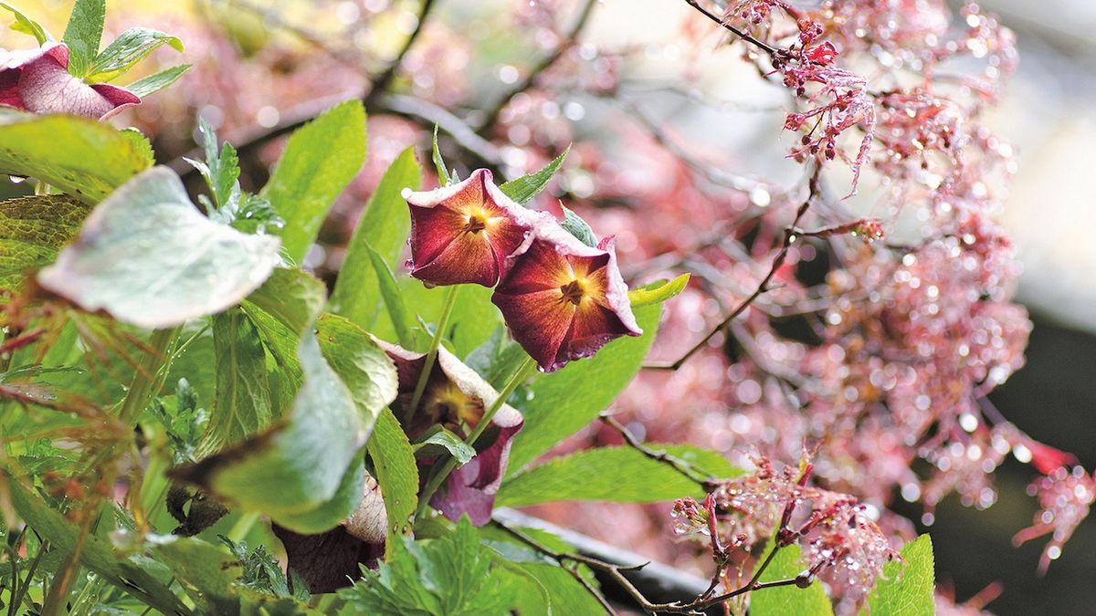 Famózní magenta v jarních květech